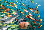 Setting Up Your African Cichlids Tank
